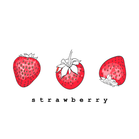 strawberries on a white background. vector illustration