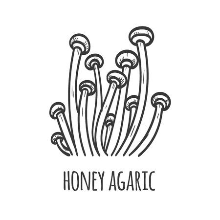 Honey agaric mushroom sketch illustration  イラスト・ベクター素材