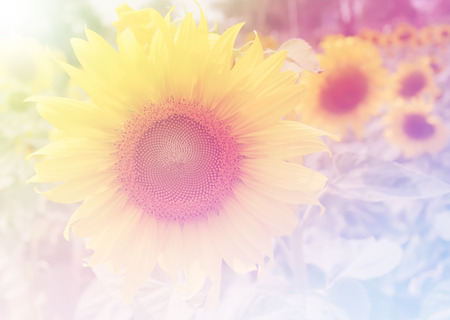 filters: Beautiful flowers made with color filters soft focus