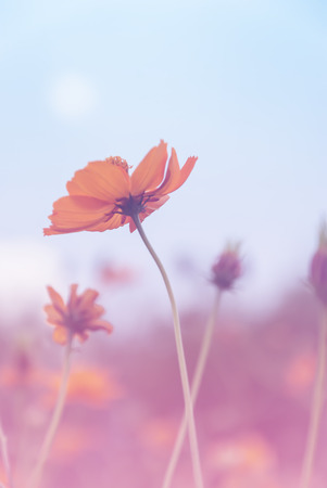 background designs: Beautiful flowers made with color filters soft focus