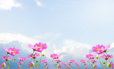 beautiful sky: Beautiful pink flowers and Blue sky with cloud