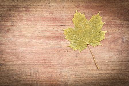 luminance: Maple Leaf on wood