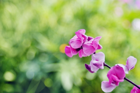 Beautiful pink flowers of wild Bean plant on the green background photo