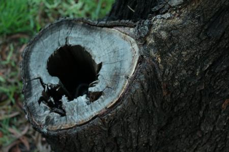 hollow: Tree hollow