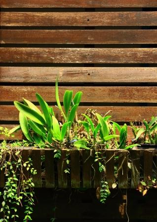 plaster of paris: Slat wall with ornamental plants.