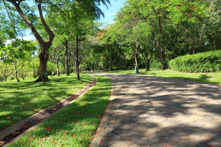 pedestrian walkway: Pedestrian Walkway for Exercise Lined Up with Silvan Tree