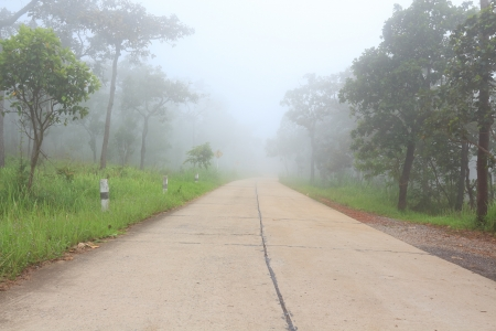 Road to Forest with Very Foggy   photo