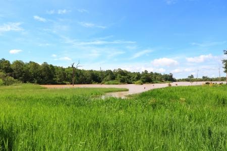 Grass Field Around Small Lake with Blue Sky  photo