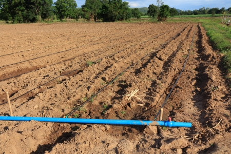 plentifully: Water Irrigation System on a Field with a Sugar Cane Farm Plentifully