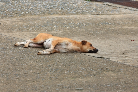 Street Dog is Sleeping  photo