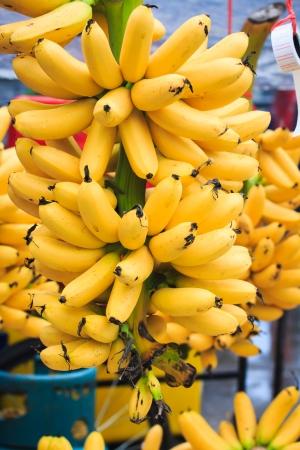 musa: Pisang Mas Banana or Musa  Kluai Khai  Banana in Thailand