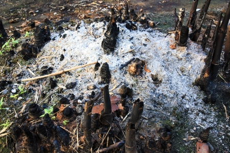 deforested: Slash and Burn Bamboo Cultivation in the Country of Thailand