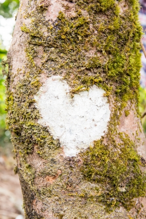White Heart on Tree  photo