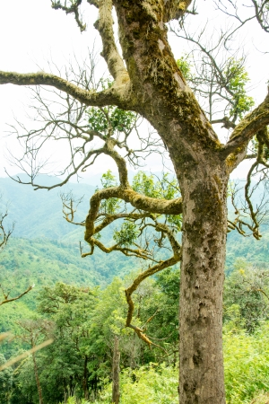 Asian Rainforest  Stock Photo - 24665904