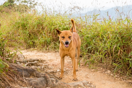 The Thai Dog on the Happy Time  Stock Photo - 24665926