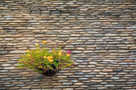 hanging basket: Hanging Basket of Flower on Stone Wall