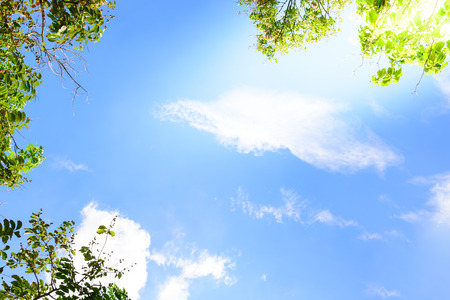 blue green background: Blue sky with green leaves frame background.
