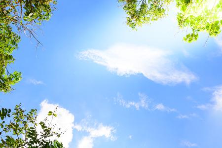 leaves frame: Cielo azul con las hojas verdes del fondo del marco.
