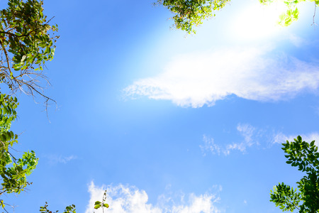 Blue sky with green leaves frame background.