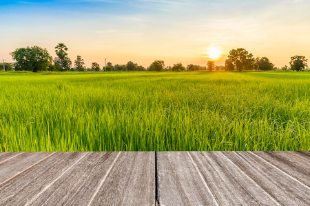 Vintage wooden texture with rice field in the morning. Stock fotó
