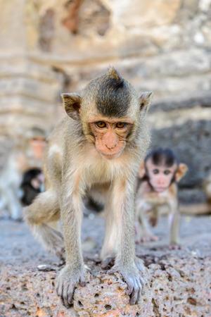 stargaze: Baby monkey in Lopburi, Thailand.