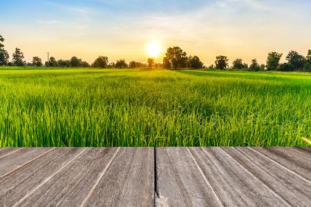 arroz: Textura de madera de la vendimia con el campo de arroz en la mañana.