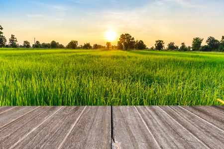 Vintage wooden texture with rice field in the morning. Stockfoto