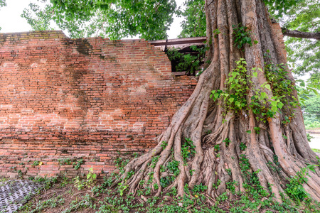 Parasite tree at Wat Khun Inthapramun public temple in Thailand. Stock Photo
