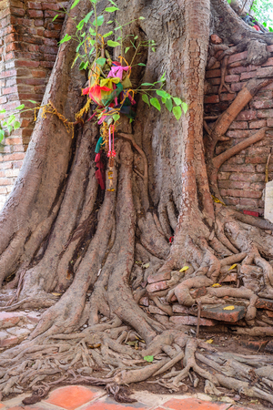 parasite: Parasite tree at Wat Khun Inthapramun public temple in Thailand. Stock Photo