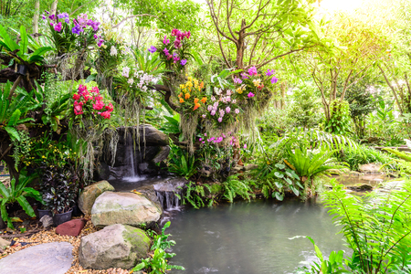 Beautiful orchid garden with waterfall.