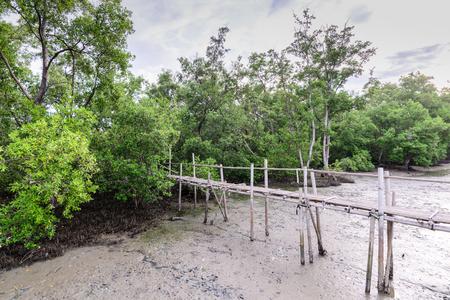 bridge nature: Bamboo bridge nature trail mangrove forest.