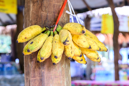 wooden post: Yellow banana hanging on wooden post. Stock Photo