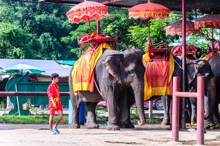 phra nakhon si ayutthaya: PHRA NAKHoN SI AYUTTHAYA, THAILAND - 2015 September 21: Unidentified mahout and elephants waiting for traveller to take tuor arond Ayutthaya island.