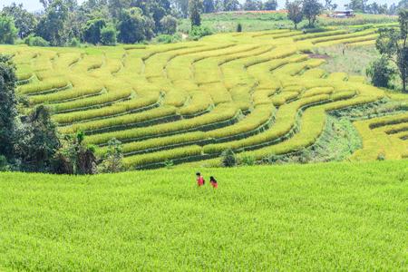 leisurely: Motion blur of couple walk leisurely romance in rice field. Stock Photo
