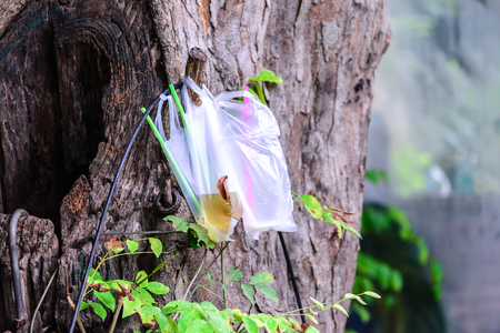 wastrel: Plastic garbage, plastic bag used for sparkling water was left on tree.