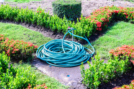 coiled: Coiled water hose in garden.