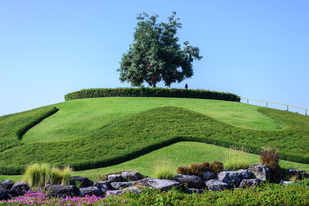 prominence: Slope garden with tree for scenic point.