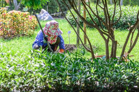 flowering plants: Gardener caring for flowering plants in garden. Stock Photo
