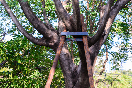 bracing: Tree branch bracing with steel in garden