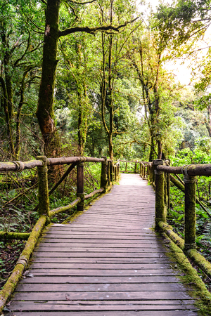 Wooden footpath nature trail at Doi Inthanon National Park in Chiang Mai, Thailand. Banco de Imagens - 49953883