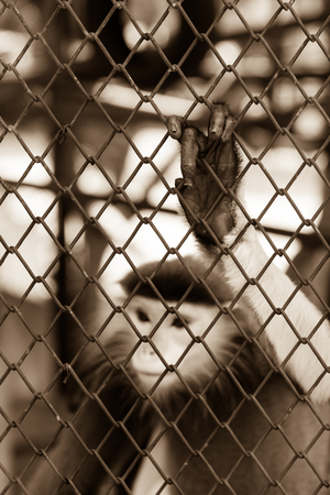 incarcerate: Sepia tone of Monkey hand touching a cage, lack of independence.