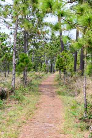 loei: Nature trail for cycling and walking in Phu Kradueng national park, Loei Thailand.