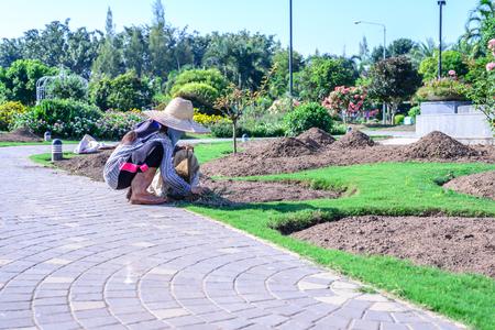 caring for: Gardener caring for flowering plants in garden. Stock Photo