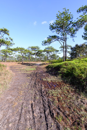 kradueng: Nature trail for cycling and walking in Phu Kradueng national park, Loei Thailand.