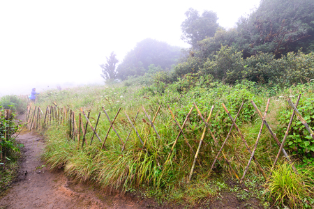confines: Bamboo fence for protect restricted area in nature trail.