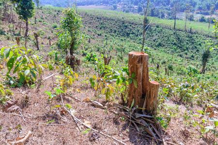 deforestacion: Árbol fueron cortadas, daños deforestación cambio global.