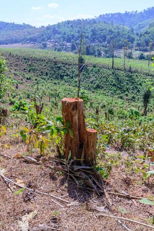 deforestation: Tree were cut, deforestation damage global change.