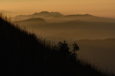 a slope: Silhouette tree on mountain slope at sunrise.