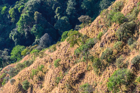 desertification: Beautiful tropical forest landscape in desertification area.
