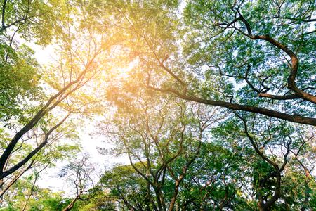 sylvan: Sylvan of under tree branches in city park.